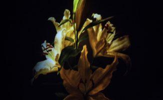 Un bouquet de lys jaunes pâles entouré de noir